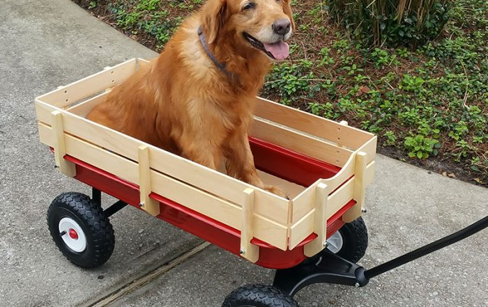 Old dog in red wagon