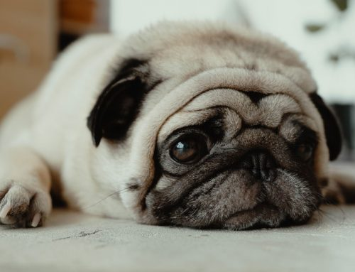 What can I give my dog for anxiety?
