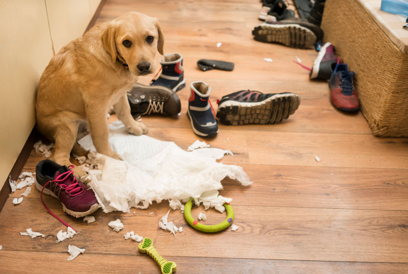 Cute puppy surrounded by mess