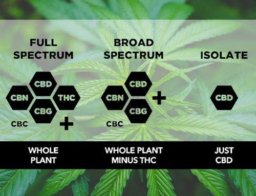 Full Spectrum vs Broad Spectrum vs Isolate CBD oil for dogs