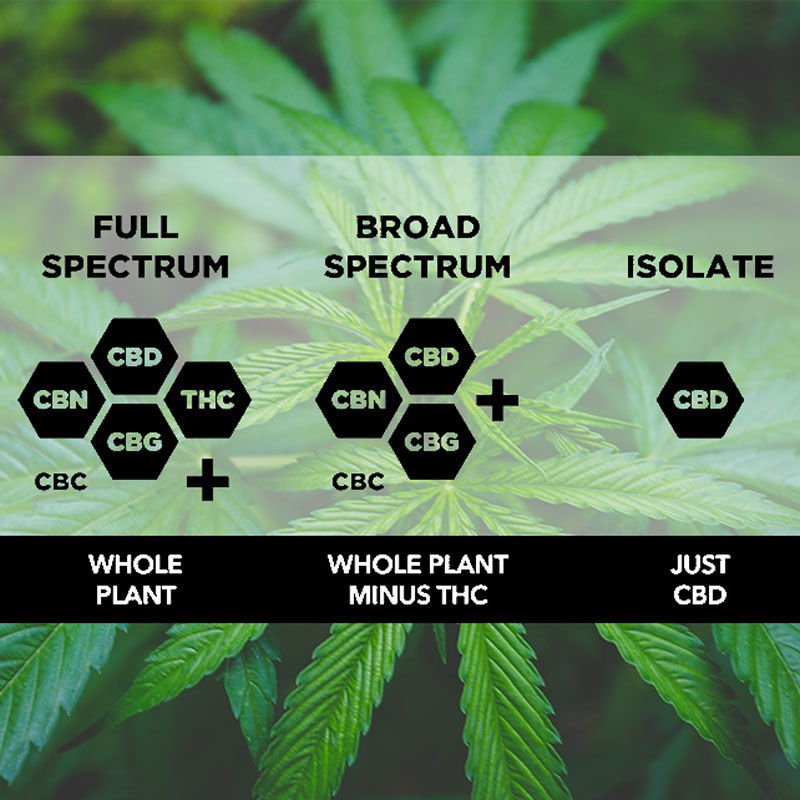 Full-Spectrum-CBD-vs-Broad-Spectrum-CBD-vs-CBD-Isolate