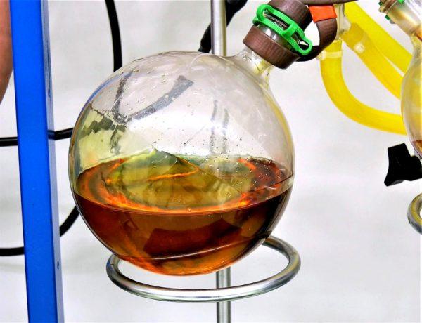 cannabinoid marijuana cannabis oil extraction in lab