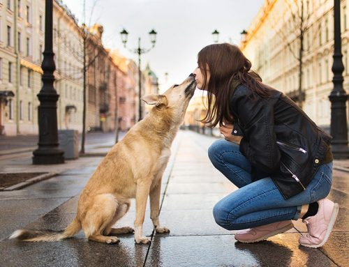 Read This Post If You Have Concerns About Giving Your Dog CBD